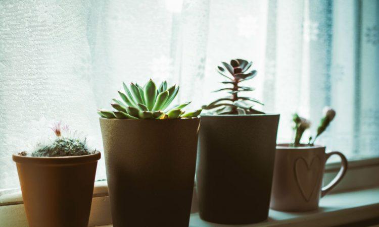 Houten plantenpot voor binnen