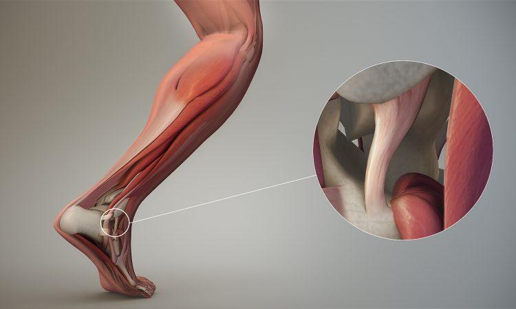 gewrichten en botten gezond