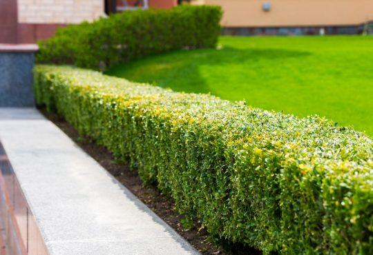 Tips voor een onderhoudsarme tuin